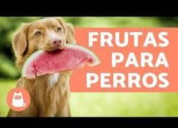 Enlace a Las mejores frutas para perros