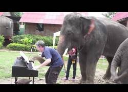 Enlace a Diferentes animales reaccionando a instrumentos musicales