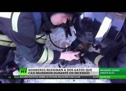 Enlace a Bomberos salvan la vida a dos gatetes que casi mueren asfixiados por un incendio