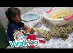 Enlace a Se hace famosa esta niña por cepillarle los dientes a su cocodrilo en casa