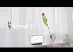 Enlace a Google presenta a Tulip para conversar con nuestras queridas plantas