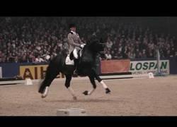 Enlace a 'Totilas' el mejor caballo de doma clásica de la historia se retira de las competiciones tras las lesiones y haber pagado 10 millones por él