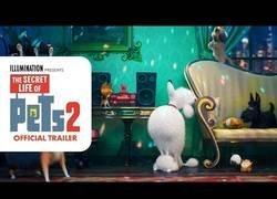 Enlace a 'The Secret Life of Pets 2' presenta su tráiler oficial