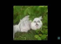 Enlace a Este gato da auténtico terror