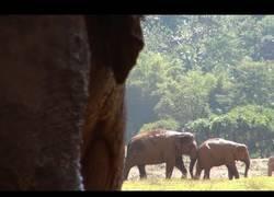 Enlace a Este elefante por fin consiguió un amigo tras ser rescatado 4 años atrás