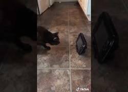 Enlace a Este gato odia por completo su reflejo y cuando lo ve ataca ferozmente