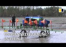 Enlace a Plantación automatizada en China