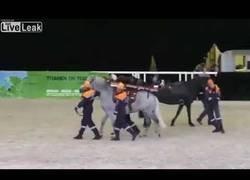 Enlace a Cuando transportas a un herido a caballo...
