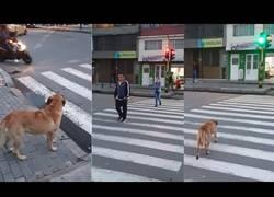Enlace a Perro es captado respetando las señales de tránsito en Colombia