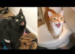 Enlace a 7 sonidos que hacen los gatos y qué significan