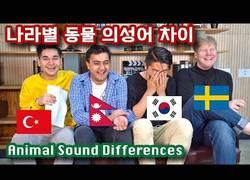 Enlace a Cómo suenan estos diferentes animales en cada país