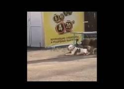 Enlace a Perro callejero libera a un compañero domesticado y se lo lleva de paseo