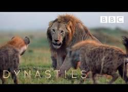 Enlace a León vs 20 hienas