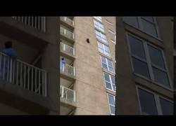 Enlace a Un mapache cae de la fachada de un edificio y sobrevive