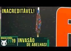 Enlace a Invasión de abejas en el banderín de un campo de fútbol en Brasil