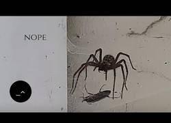 Enlace a La mandíbula de esta araña no tiene competidor