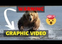 Enlace a ¿A quién se le ocurre grabar cómo le das una patada a un oso?