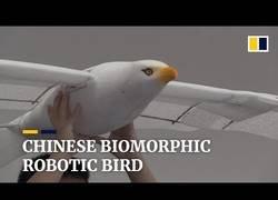 Enlace a China crea un drone-gaviota que imita los movimientos de las mismas