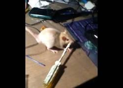 Enlace a La ratita que arregla una pantalla con un destornillador