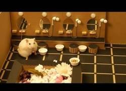 Enlace a La vida de lujo de este hamster
