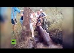 Enlace a Salvan a un ciervo atrapado en un lodazal