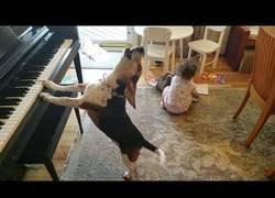 Enlace a Un perro toca el piano mientras un bebé baila al son de la música