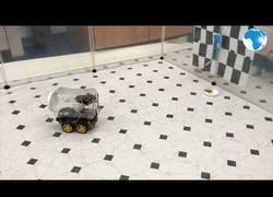 Enlace a Científicos diseñan un prototipo de coche conducido por ratas