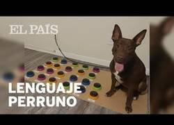 Enlace a Un perro se comunica con sus dueños mediante botones con sonido
