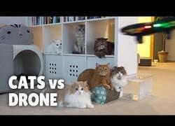 Enlace a Así reaccionan los gatos ante la presencia de un dron