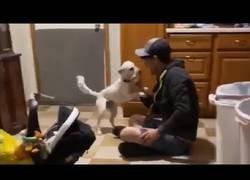 Enlace a La reacción de un perro ciego y un perro sordo al reencontrarse con sus dueños una semana después