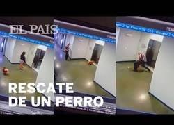 Enlace a Un chico salva a un perro que había quedado atrapado por las puertas de un ascensor