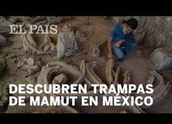 Enlace a Hallan trampas prehistóricas para mamuts en México