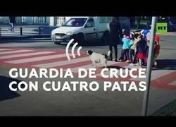 Enlace a Un perro ladra a los coches para ayudar a cruzar la carretera a unos niños