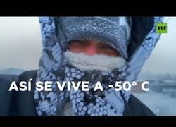 Enlace a Así es la vida a 50 grados bajo cero
