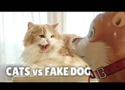 Enlace a ¿Cómo reaccionarán los gatos al encontrarse con un perro falso?