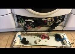 Enlace a Descubren que la lavadora SÍ se come los calcetines que perdemos