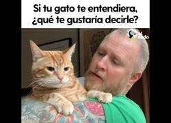 Enlace a ¿Qué le dirías a tu gato si pudiera entenderte?