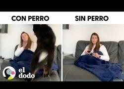 Enlace a La vida con perro vs. La vida sin perro