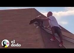 Enlace a Rescatan a un perro que había quedado atrapado en un tejado