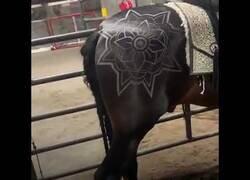 Enlace a Arte plasmado sobre el pelaje de caballos