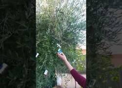 Enlace a Los árboles que todos querríamos en nuestro jardín