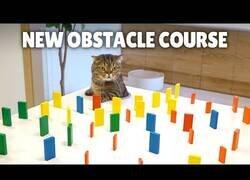 Enlace a El increíble sigilo con el que los gatos cruzan un pasillo lleno de fichas