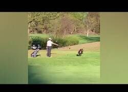 Enlace a ¿Cómo actuarías si te encuentras a un pavo en un campo de golf?