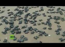 Enlace a Miles de crías de tortuga aparecen en una playa de la India