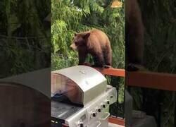 Enlace a Un oso se cuela en una casa particular