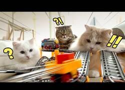 Enlace a ¿Cómo reaccionan los gatos ante trenes de juguete?