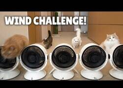 Enlace a Gatos luchando contra el viento
