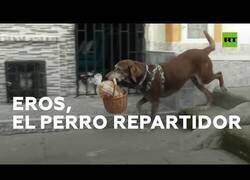 Enlace a Un perro reparte la compra a domicilio durante la pandemia