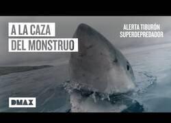 Enlace a Buscando al mayor depredador de los mares