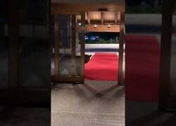 Enlace a Un oso se cuela en el hall de un hotel en Alaska